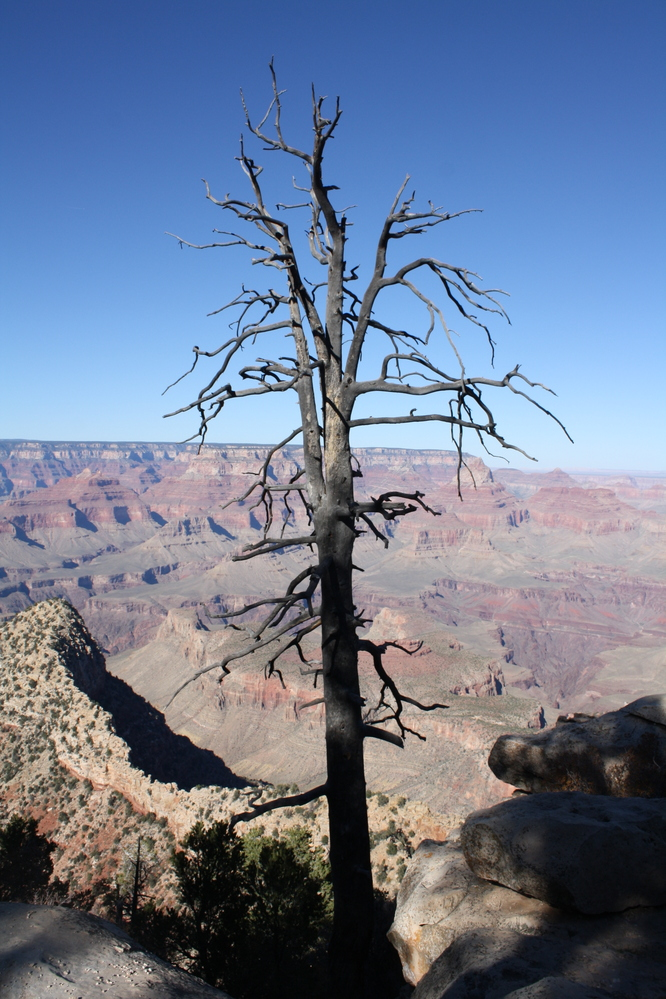 tree bare branches grand canyon nzmuse