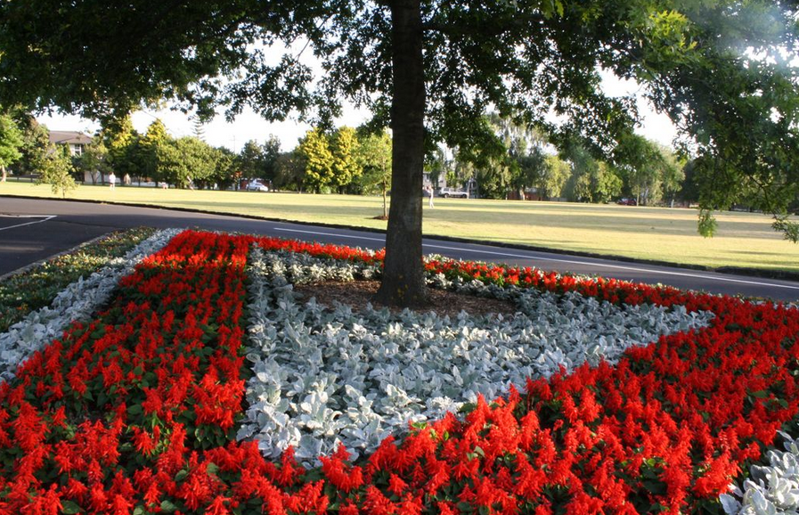 colourful flowerbeds cornwall park auckland