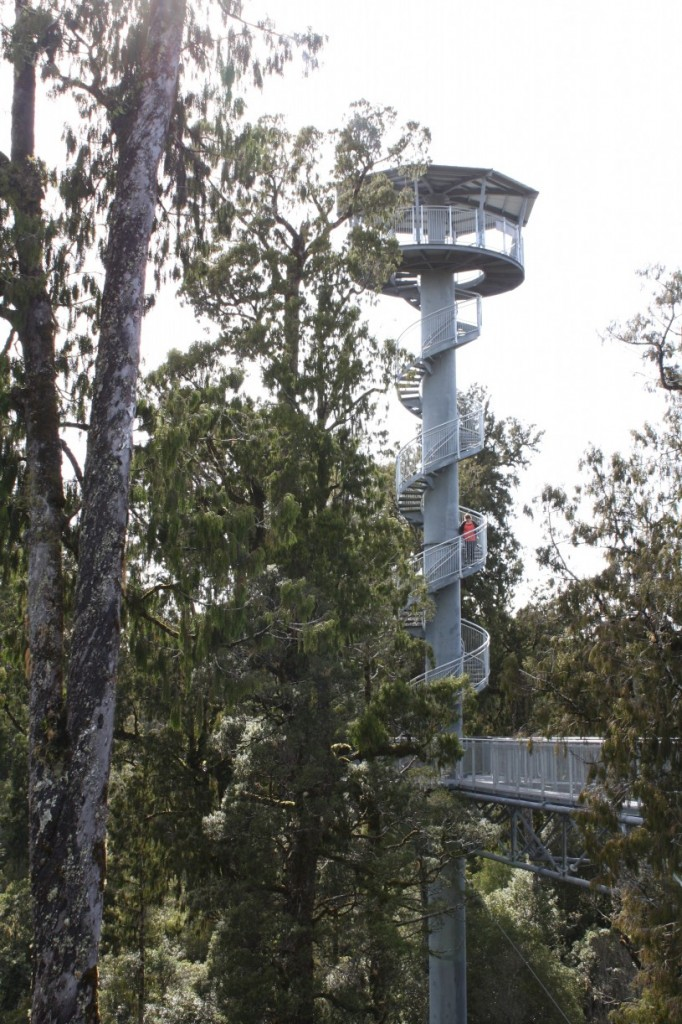 Treetops walk near Hokitika