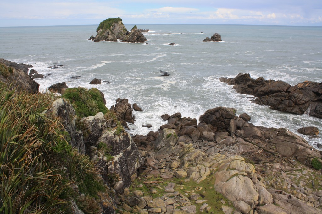 Seal colony at Cape Foulwind / Tauranga Bay in the South Island NZ