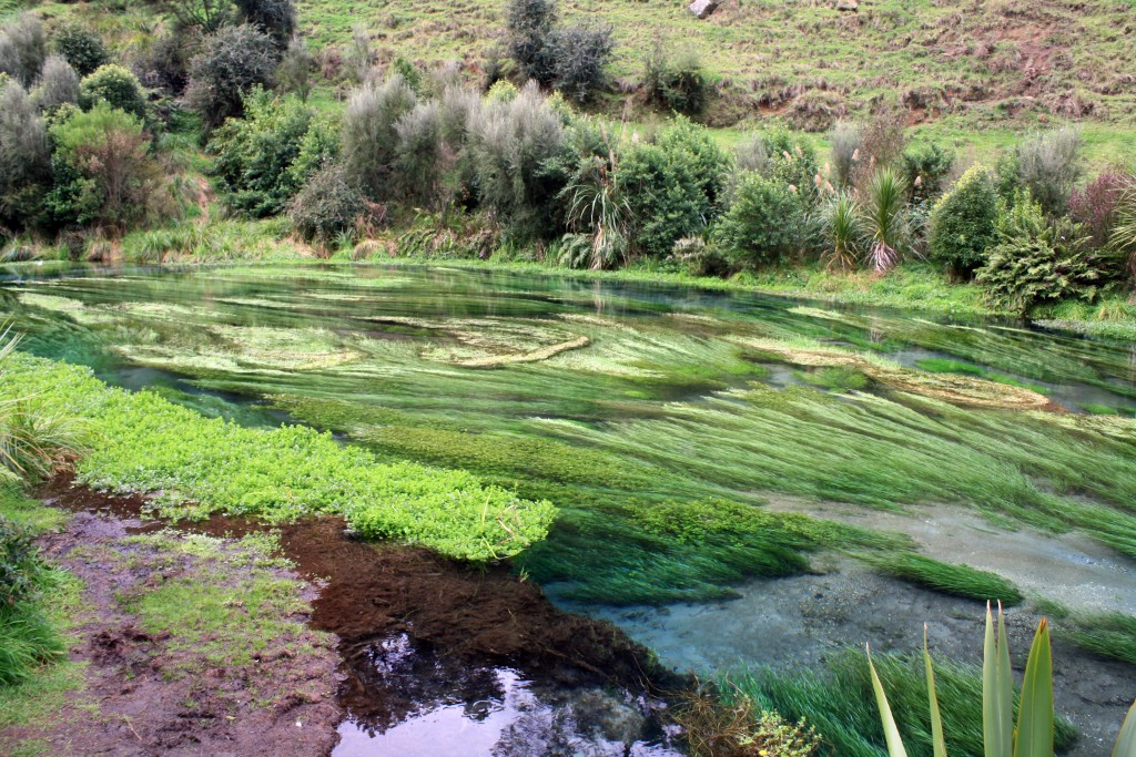Blue Spring Te Waihou NZ near Putaruru