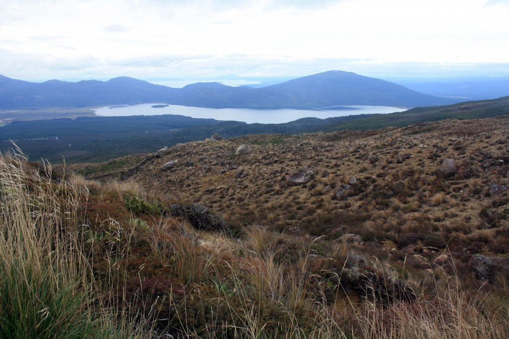 Tongariro Alpine crossing - last stretches, volcanic landscapes and tussock