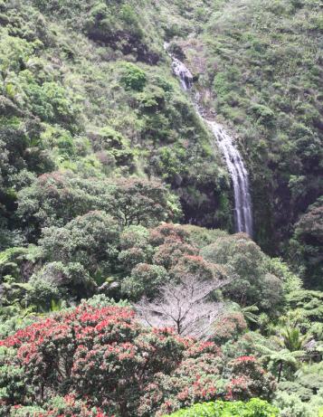 karekare waterfall west auckland