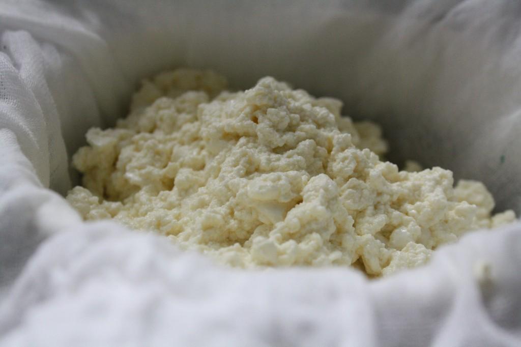 cheesemaking 5